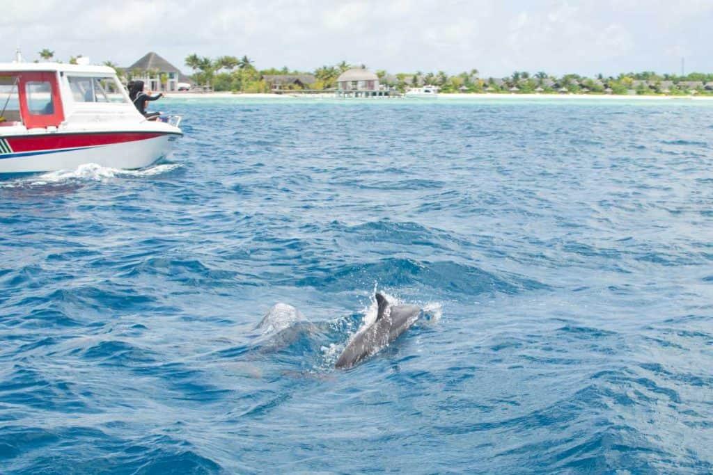 Viaar a maldivas todo incluido