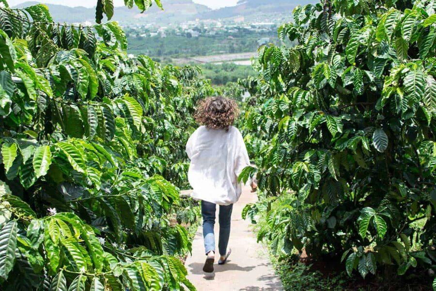 Actividades en Vietnam: visitar plantaciones de Café