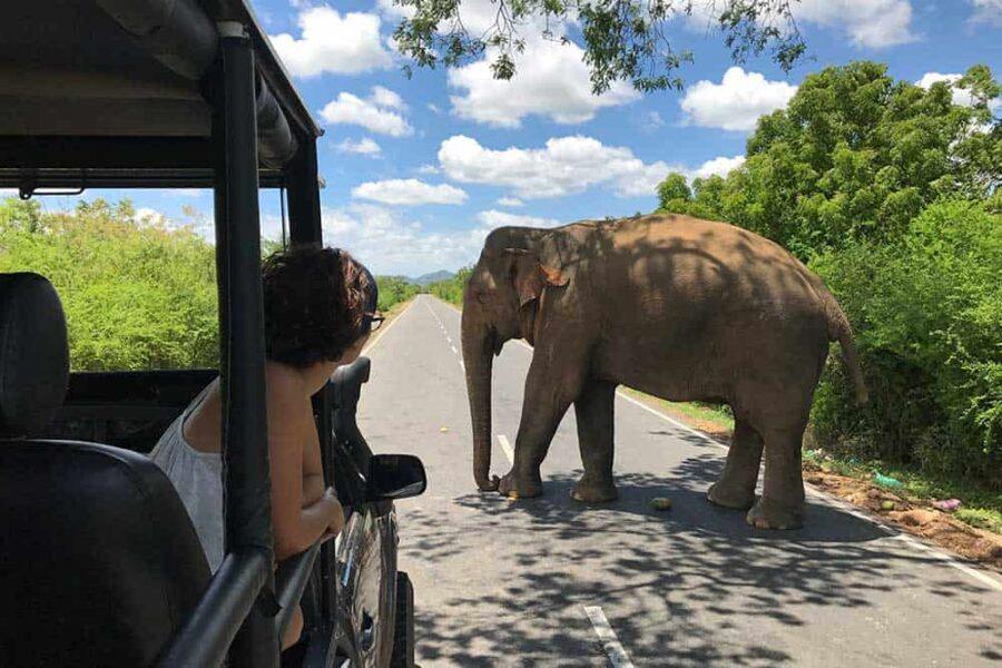 Viajar a Sri Lanka: rutas y animales