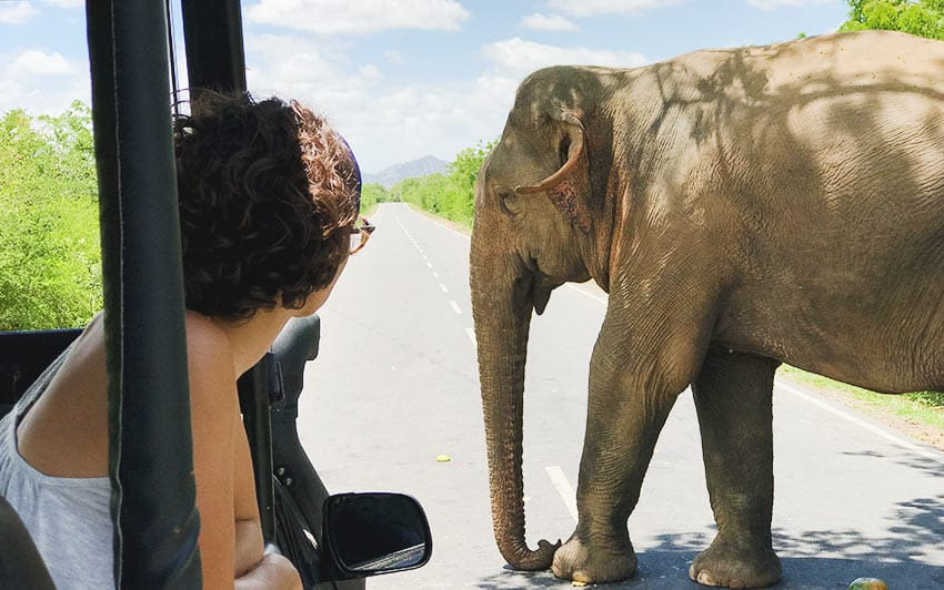 Viajar a Sri lanka: consejos y rutas para un viaje ÉPICO
