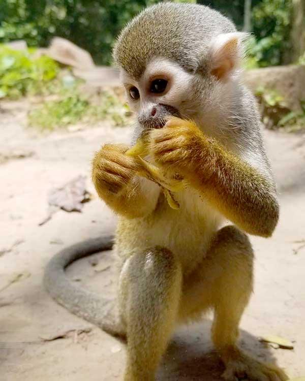 Isla de micos, Colombia