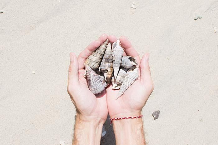 No te lleves conchas de la playa