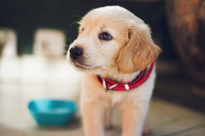 Cuidar mascotas en casas ajenas