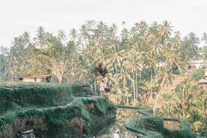 Campos de arroz Tegallalang